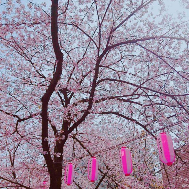 春、お花見そして…